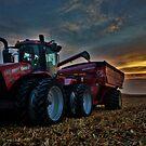 Sunset Corn Harvest by Studio601