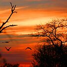 Spectacular African Sunset! by jozi1