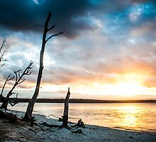 Swan Lake by Clinton Hadenham
