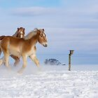 Horses in the Snow by Mark Van Scyoc