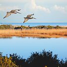 Where The Marsh Meets The Atlantic by Kathy Baccari
