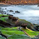 Rocks along the Shore by John Sharp