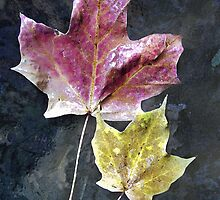 Two Autumn Leaves by Kathilee