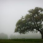 Tree In Fog by Tim Waters