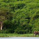 Queen Elizabeth National Park, Uganda by Miguel De Freitas