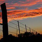 Sunset Fenceline by AbigailJoy