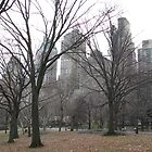 Central Park, NYC by gemeenie