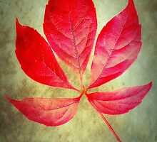 Autumn Glow by Christine Lake