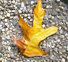autumn 15 by arteology