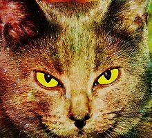 Eye Contact by Anastasiya Malakhova