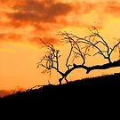 sunset 8 by Tim Horton
