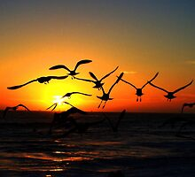 sunset and seaguls by Tim Horton