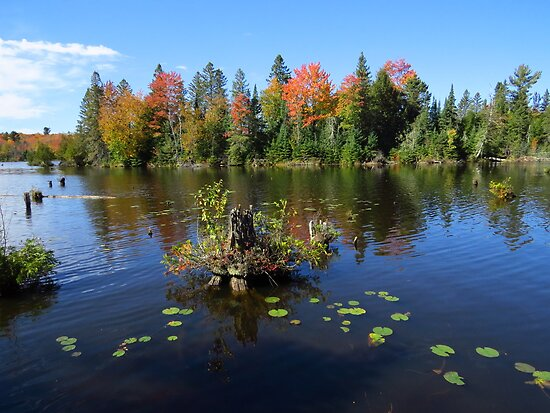 Lily Pads in Autumn by lorilee