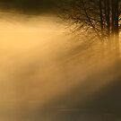 4.10.2013: October Morning I by Petri Volanen