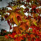 I Fell for Fall by Charles & Patricia   Harkins ~ Picture Oregon