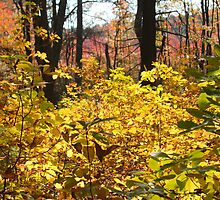 Noanet Woodlands Fall Foliage by CapeCodGiftShop