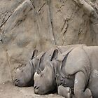 Dreaming Rhinos by Sky R.