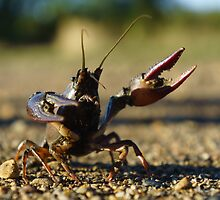 Combative Crawfish by Jon Unsell