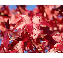 Raindrops RED Autumn Leaves Art Prints Gifts Photographic Print