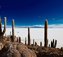 gigantic cacti on Incahuasi Island,  Salar de Uyuni by travel4pictures