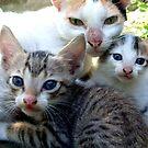 3's a family! by Vivek George Koshy