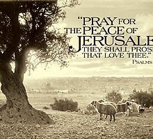 """Card """"Pray for the Peace of Jerusalem"""" (Mount of Olives) - ca. 1910 by Doug Heckaman"""