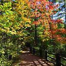 Autumn Walk in the Park by lorilee