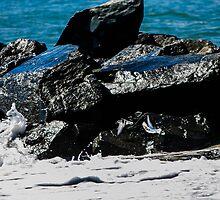 Rock Birds by MattyBoh424