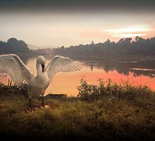 Swan Lake  by Kerto Koppel-Catlin