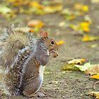Squirrel by Tamara Al Bahri