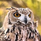 The Eyes of a Desert Raptor ( 2 ) by Larry Lingard/Davis