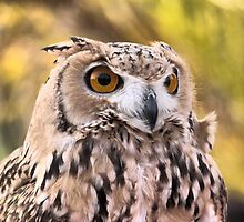 The Eyes of a Desert Raptor ( 2 ) by cullodenmist