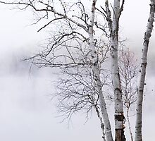 Birch trees over misty white lake nature scenery art photo print by ArtNudePhotos