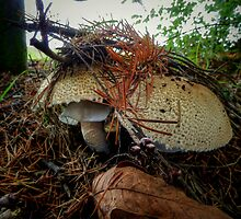 The Big Boys ~ Mushrooms ~ by Charles & Patricia   Harkins ~ Picture Oregon