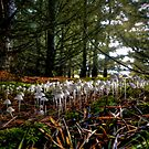 Family Get-To-Gether ~ Mushrooms ~ by Charles & Patricia   Harkins ~ Picture Oregon