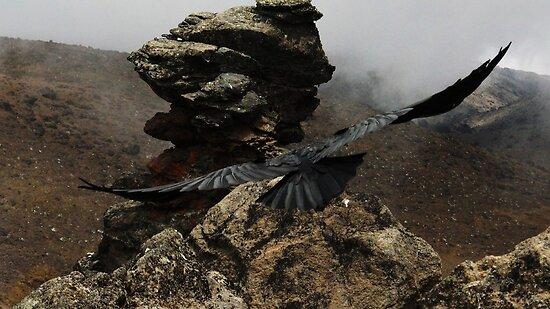 Soaring Mountain Raven by mortaloak