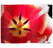 Tulip Macro # 10 Poster