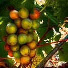 I Am Early ~ Grapes ~ by Charles & Patricia   Harkins ~ Picture Oregon