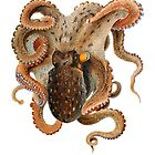 Octopus fun sea creature by nadil