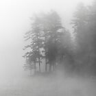 Lost in the Fog by Caleb Ward