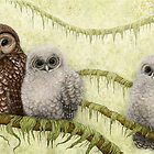 Northern Spotted Owls (Strix occidentalis caurina) by Mariya Olshevska