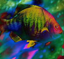 4405 Psychedelic Fish by AnkhaDesh