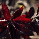 Raindrops and Vigorous Reds by Georgia Mizuleva