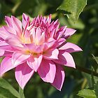Pink Dahlia by Linda  Makiej
