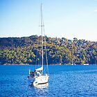 sailing boat in sydney  by faithie
