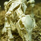 Piglet Skeleton by Steve E