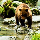 Young Grizzly on the Chilkoot River by Yukondick