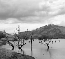 Skeletons in the water - Lake Hume by Norman Repacholi