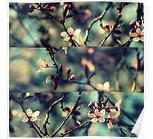 Vintage Blossoms - Triptych Poster