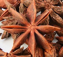 Star Anise by rhamm